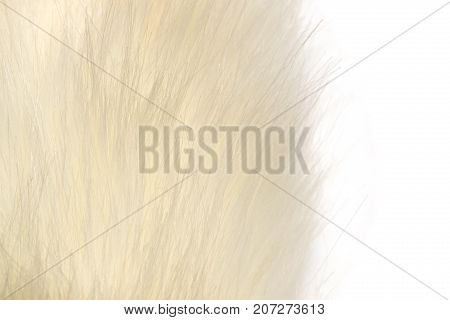 background of white fur . Photos in the studio