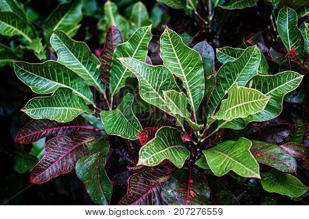red maroon green leaf with yellow line black background
