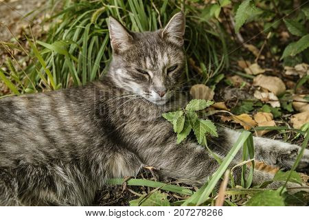 Grey cat on green grass. Grey cat. Gray cat. Gray cat portrait. Gray cat background.
