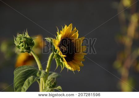 Beautiful small flower of color yellow. The nature is magnificent.