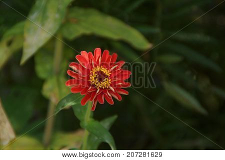Beautiful red flower, which represent the beauty of the nature.