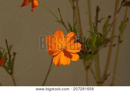 Beautiful flower of colors orange. The nature is magnificent.