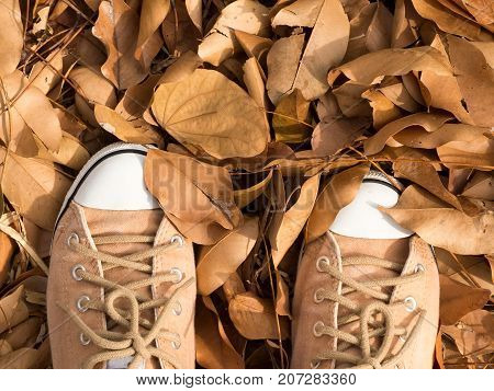 Brown sneakers stand on autumn dry leaves falling on floor background.