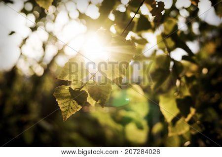 The Warm Autumn Sun Shining Through The Golden Canopy