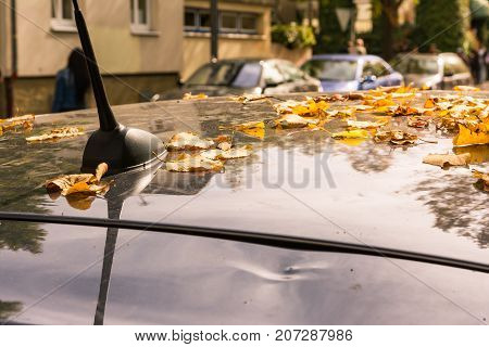 Autumn Leaves Scattered On Car Roof Seasonal Detail