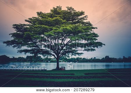 Lonely giant tree standing on green grass with the lake and sunlight background in rainy day.