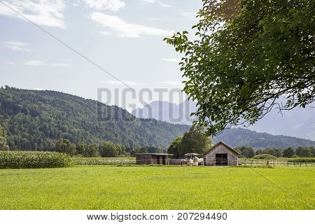 Switzerland August 2017 horse stable a small wooden stable a stables in the mountains horse eat horse stables near corn fields horses mountains horses in Switzerland summer in the mountains