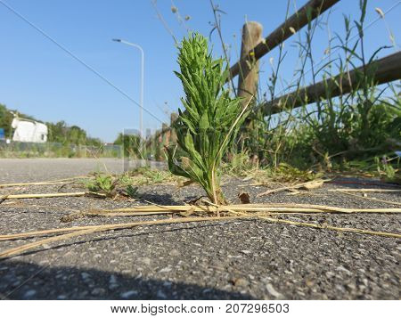 Nature we can build roads everywhere and nature will always find ways to reborn in some