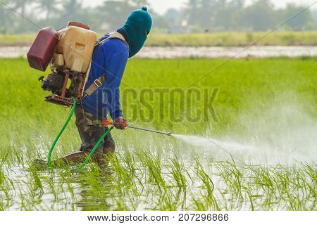 Farmer is spraying pesticide to protect plants by manual backpack sprayer.