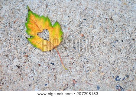 Lone yellow and green autumn leaf with a heart shape cut out of the center