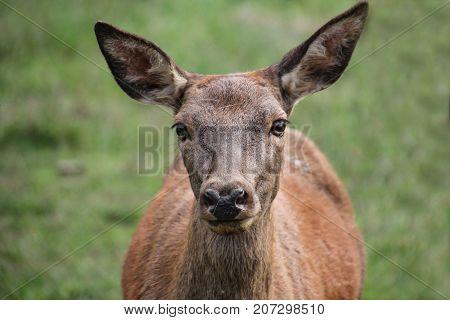 Wild deer / Wild deer in the woods