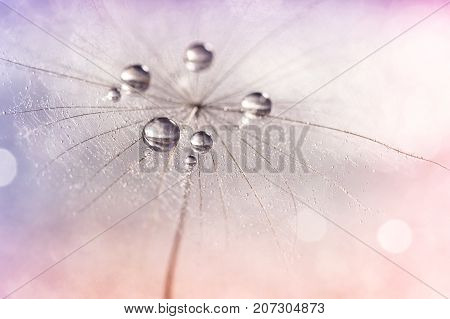 Silver droplets of dew on a dandelion. Romantic and beautiful image. Selective focus. Dandelion on a multi-colored neyunom background.