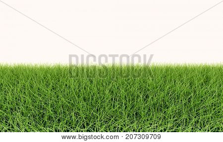 Green grass lawn horizontaly seamless template. 3D illustration.