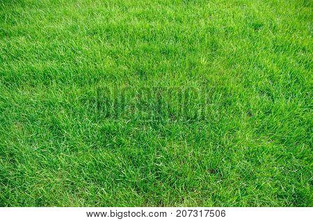Green grass background texture. Element of design