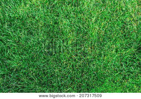 Park field of fresh green grass texture as a background, top view, horizontal