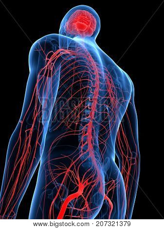 3d rendered medically accurate illustration of the human nervous system