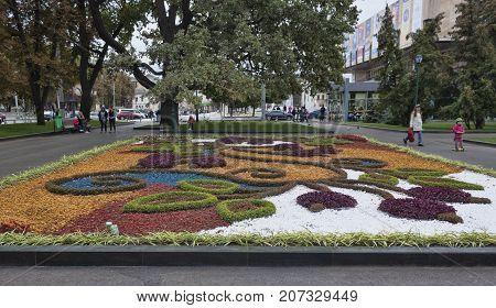 KHARKIV UKRAINE - OCTOBER 1 2017: Autumn flowers on a bed in Kharkiv Shevchenko Park adorn the city