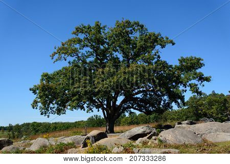 A solitary White Oak tree stands atop a rocky knoll in Gettysburg, Pennsylvania, USA.
