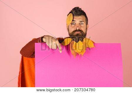 Man With Natural Yellow Fall Leaves Beard Hold Paper.