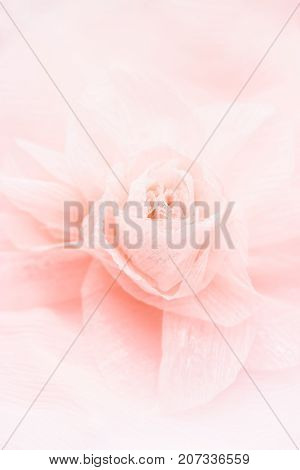 Wedding background. Beautiful silk rose on a delicate silk background
