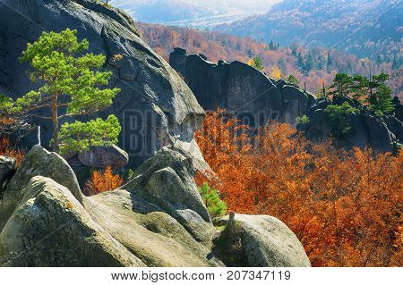 autumn forest and mountains in the background. Multicoloured wood