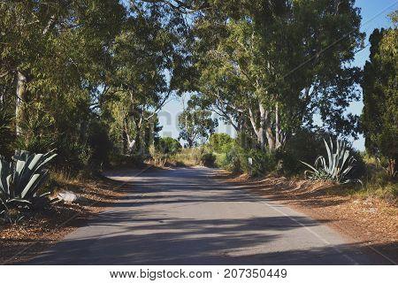 Carretera con árboles y cactus a los lados