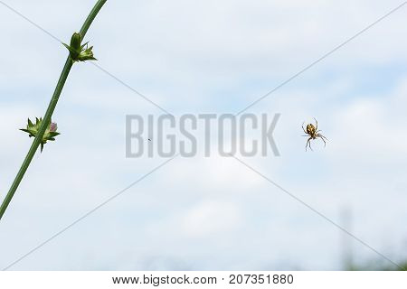 Green stalk of a plant and a small spider on a background of blue sky with white clouds