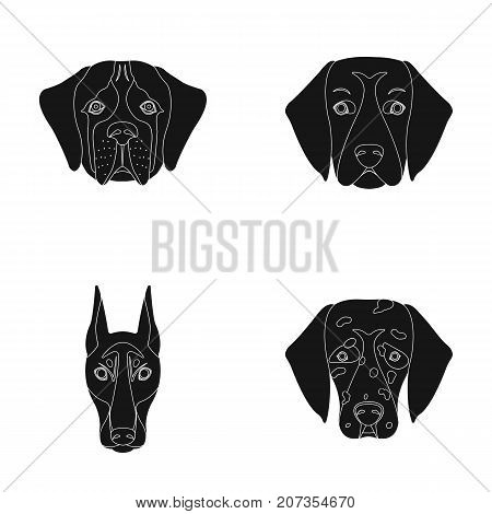 Muzzle of different breeds of dogs.Dog of the breed St. Bernard, golden retriever, Doberman, Dalmatian set collection icons in black style vector symbol stock illustration .