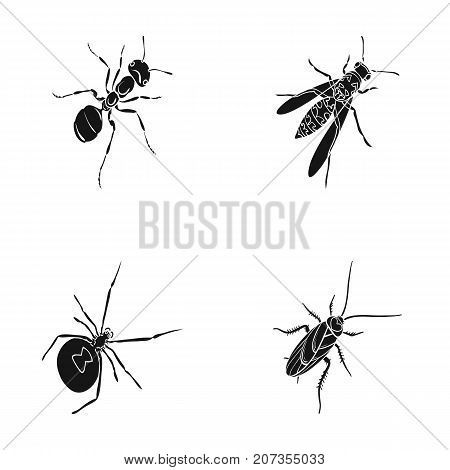 An insect arthropod, an osa, a spider, a cockroach. Insects set collection icons in black style vector symbol stock isometric illustration .
