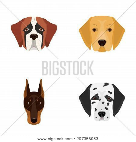 Muzzle of different breeds of dogs.Dog of the breed St. Bernard, golden retriever, Doberman, Dalmatian set collection icons in cartoon style vector symbol stock illustration .