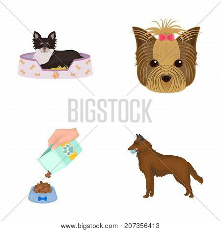 A dog in a lounger , a muzzle of a pet, a bowl with a feed, a sheepdog with a ball in his teeth. Pet, dog care set collection icons in cartoon style vector symbol stock illustration .