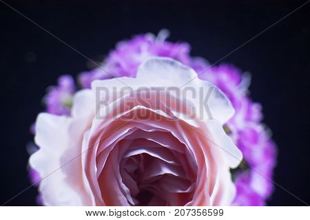Composition of flowers illuminated with neon light