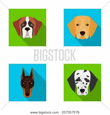 Muzzle of different breeds of dogs.Dog of the breed St. Bernard, golden retriever, Doberman, Dalmatian set collection icons in flat style vector symbol stock illustration .
