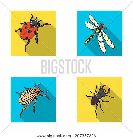 Arthropods Insect ladybird, dragonfly, beetle, Colorado beetle Insects set collection icons in flat style vector symbol stock isometric illustration .