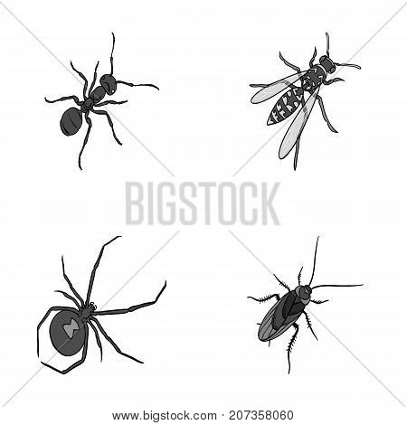 An insect arthropod, an osa, a spider, a cockroach. Insects set collection icons in monochrome style vector symbol stock isometric illustration .
