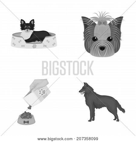 A dog in a lounger , a muzzle of a pet, a bowl with a feed, a sheepdog with a ball in his teeth. Pet, dog care set collection icons in monochrome style vector symbol stock illustration .