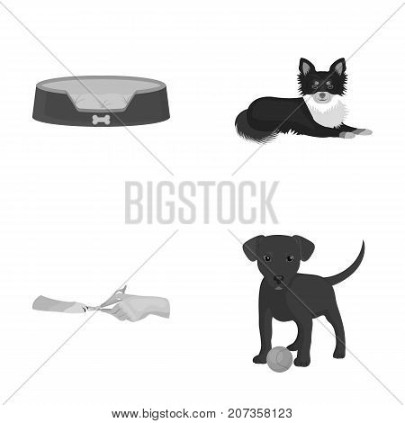 Lounger for a pet, clipping of claws in a vet clinic, lying dog, puppy with a ball. Vet clinic and pet, dog care set collection icons in monochrome style vector symbol stock illustration .