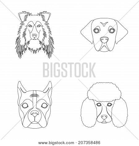 Muzzle of different breeds of dogs.Collie breed dog, lobladore, poodle, boxer set collection icons in outline style vector symbol stock illustration .