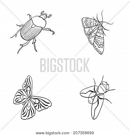 Arthropods insect beetle, moth, butterfly, fly. Insects set collection icons in outline style vector symbol stock isometric illustration .