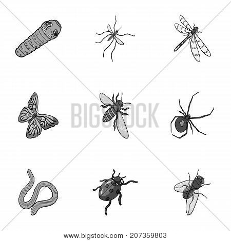 Beetle, wasp, bee, ant, fly, spider, mosquito and other insect species. Various insects set collection icons in monochrome style vector symbol stock isometric illustration .
