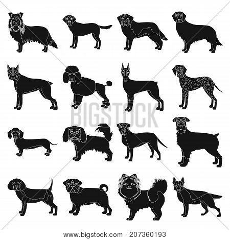 Dog, pooch, breed, and other  icon in black style.Dalmatian, shepherd, terrier icons in set collection