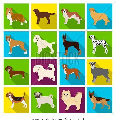 Dog, pooch, breed, and other  icon in flat style.Dalmatian, shepherd, terrier icons in set collection