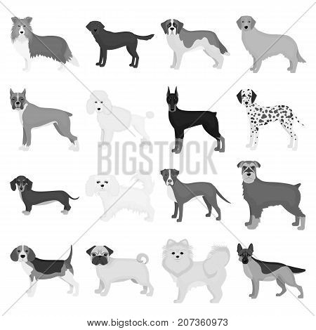 Dog, pooch, breed, and other  icon in monochrome style.Dalmatian, shepherd, terrier icons in set collection