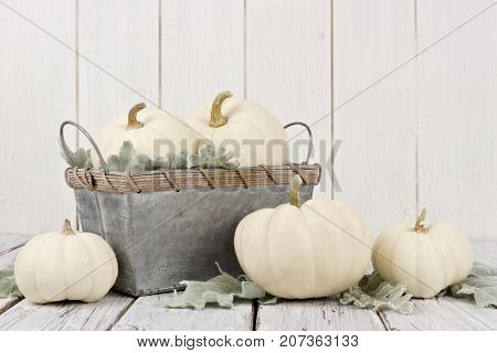 Autumn Arrangement Of White Pumpkins And Decor On A White Wooden Background