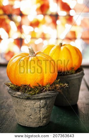 Tiny pumpkins in flower pots on old table