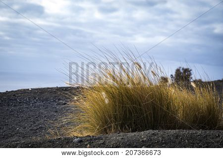 Rocky atlantic coast of Gran Canaria island, Spain. Yellow long grass in foreground.