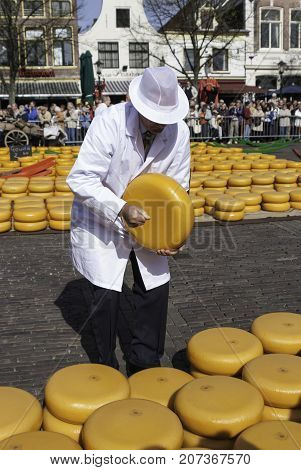 ALKMAAR NETHERLANDS - CIRCA APRIL 2007 - Every Friday from April through September the Alkmaar Cheese Market takes place on the square Waagplein in town. Trader is evaluating the cheese.