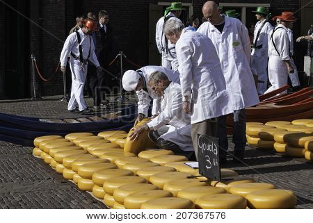 ALKMAAR NETHERLANDS - CIRCA APRIL 2007 - Every Friday from April through September the Alkmaar Cheese Market takes place on the square Waagplein in town. Traders evaluate the cheese.