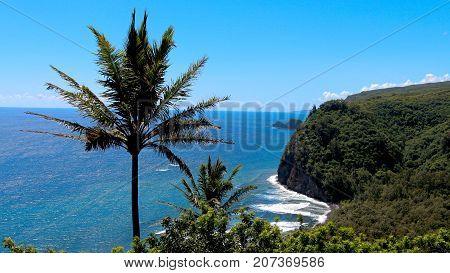 Palm tree against sea view and cliffs on the Island of Maui , Hawaii