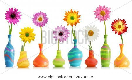 Colorful daisy flowers in bright vases isolated on white